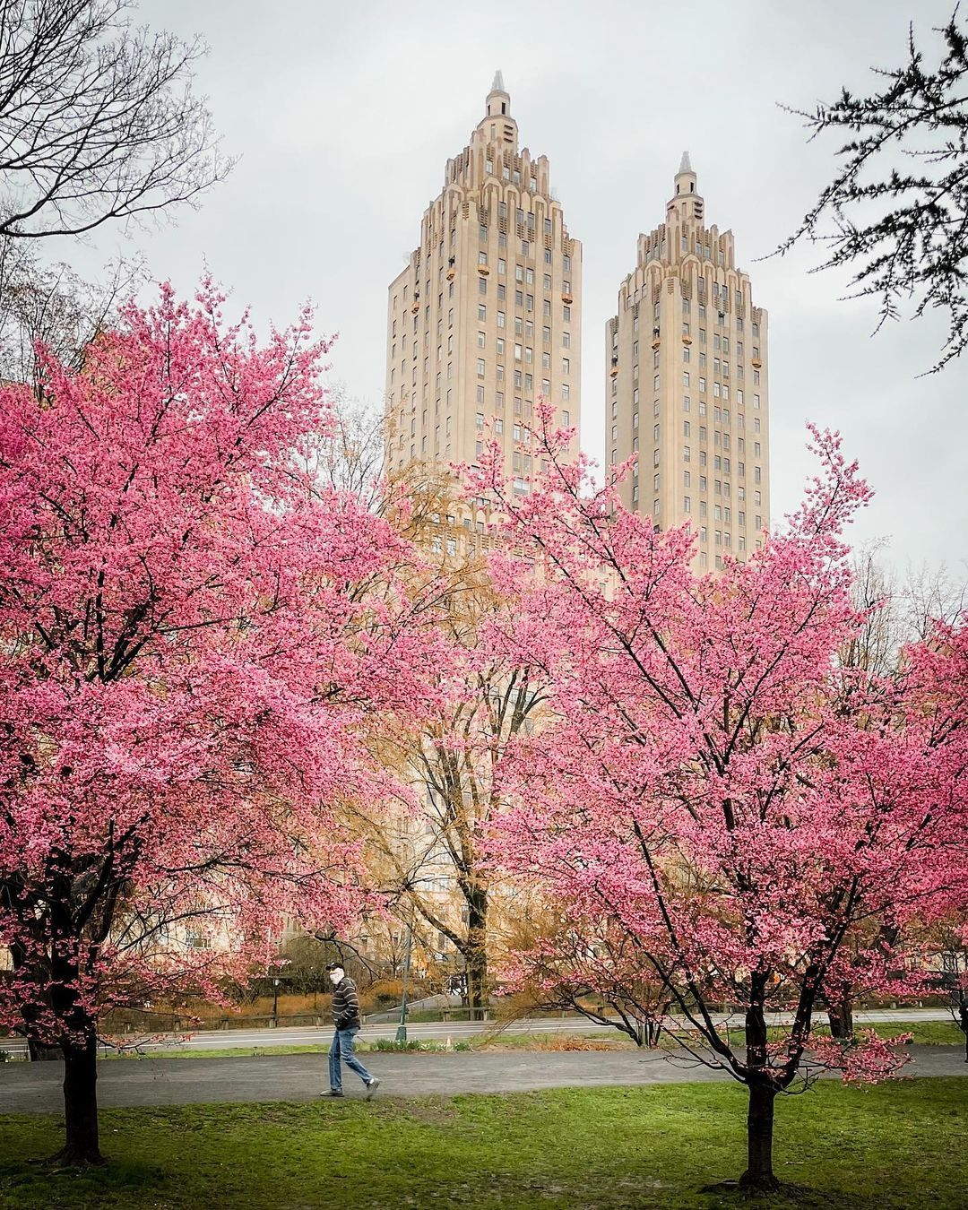 An Uptown Girl On Instagram Bloom Alert March Showers Brought March Flowers West Side Of The Res In 2021 Blossom Trees Cherry Blossom Tree Instagram