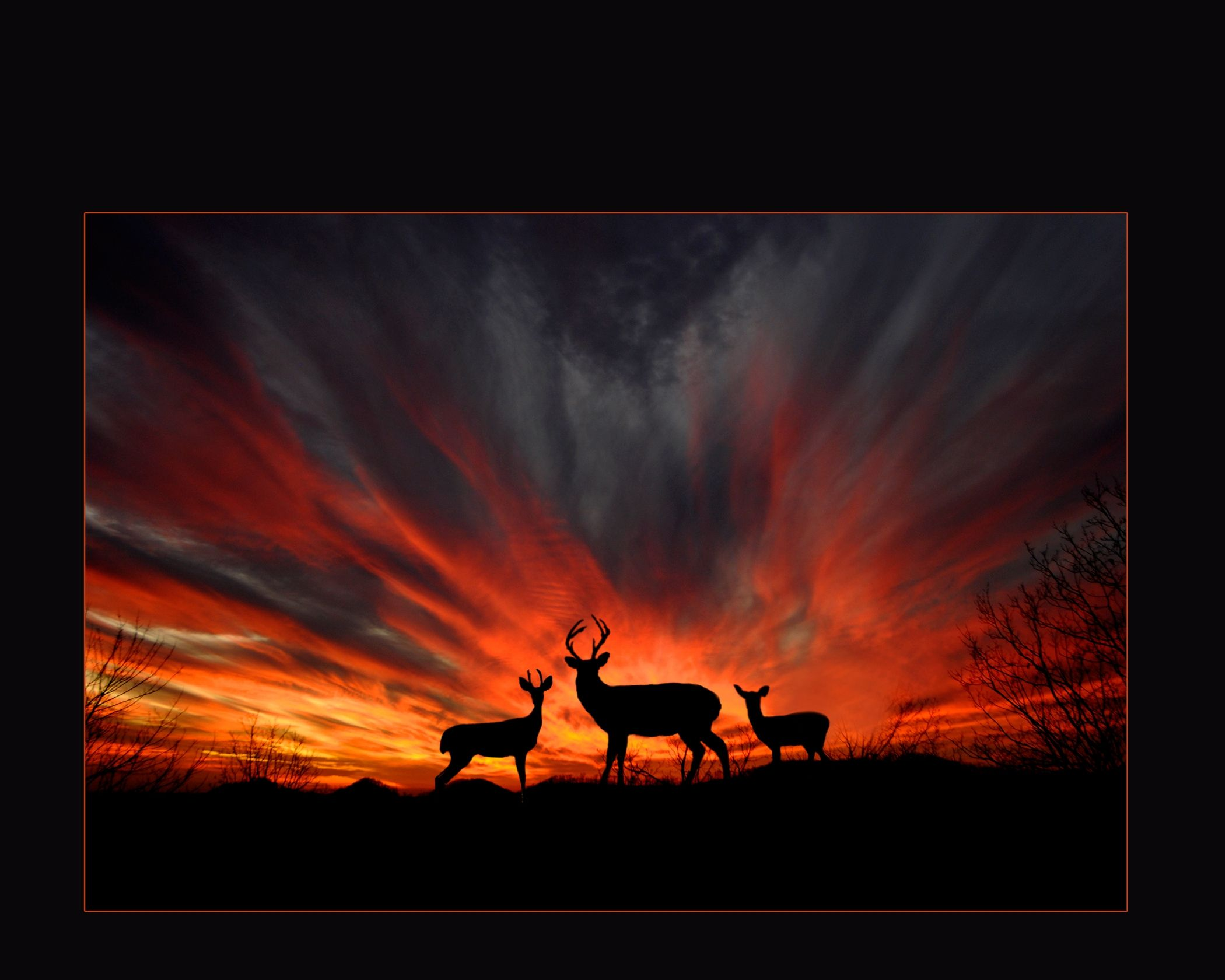 Deer Sunset. Photo by Tim Tilley