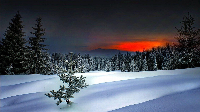 winter wallpaper pictures free (Harlow Birds 1440x810