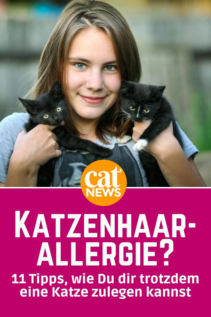 Katze Dringt In Fremdes Wohnhaus Ein Und Verwustet Es In 2020 Katzen Katzen Infos Tierhaarallergie