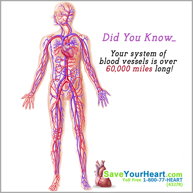 74ec559bd83400a5ad7c9e5a226d763a - How Does Blood Get From An Artery To A Vein