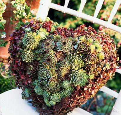 Einen lebendigen Kranz selber machen - Gartengestaltung   Kränze ...