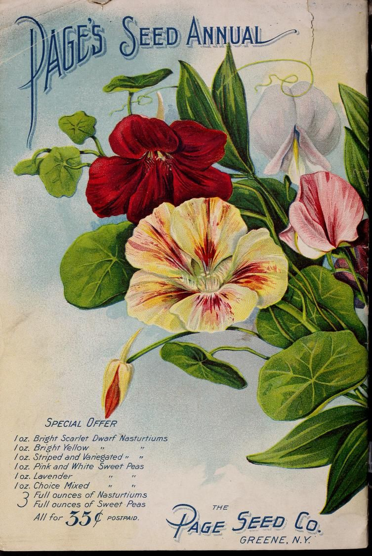 The Page Seed Co Pages Seed Annual Catalogue 1904 Vegetable