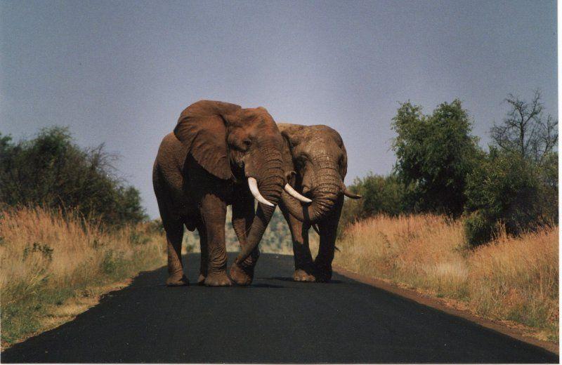 #elephants #wildlife