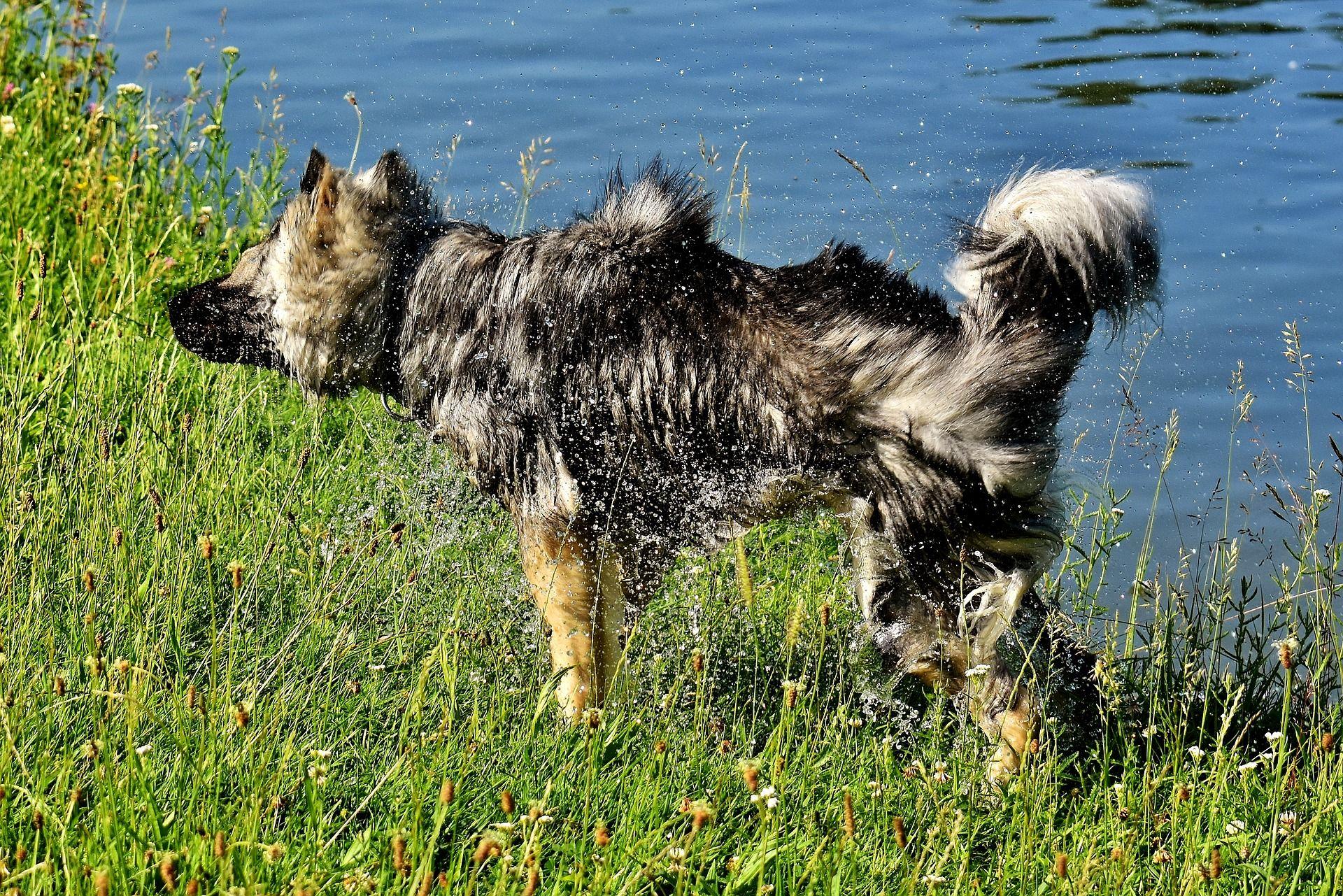Natural Dead Sea Low Maintenance Pet Bundle For Dogs