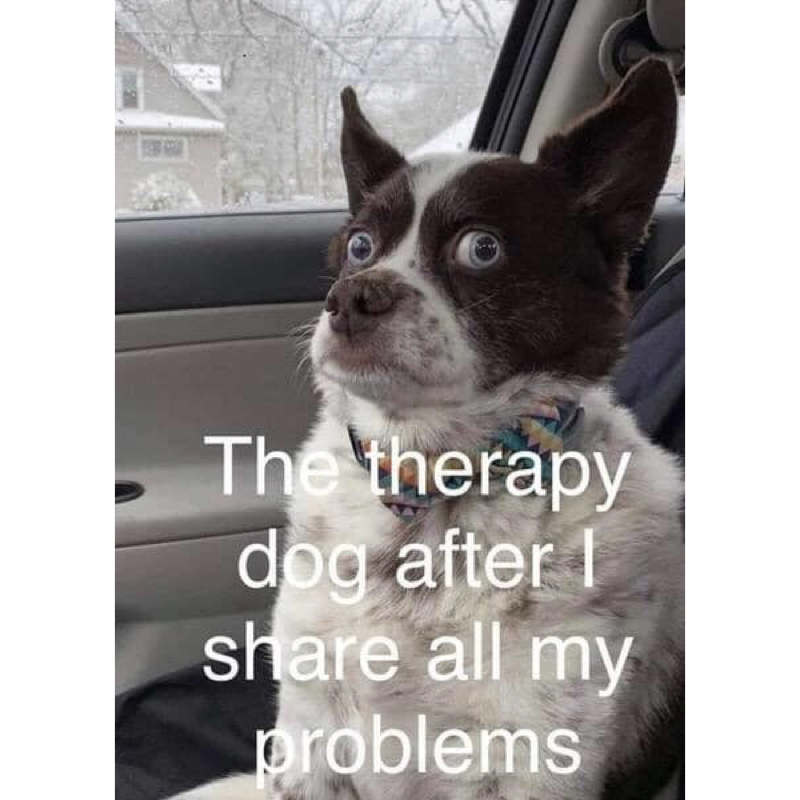 Clean Memes 10312019 Afternoon Boston terrier, Silly