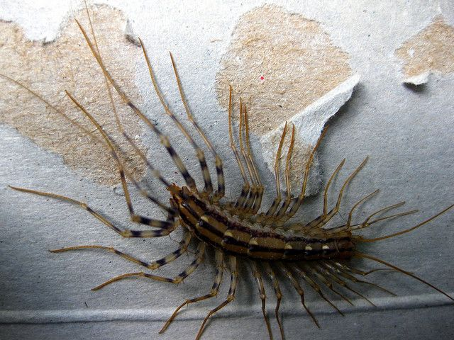 10 Horrifying Insects That Will Keep You Away From Japan Insects
