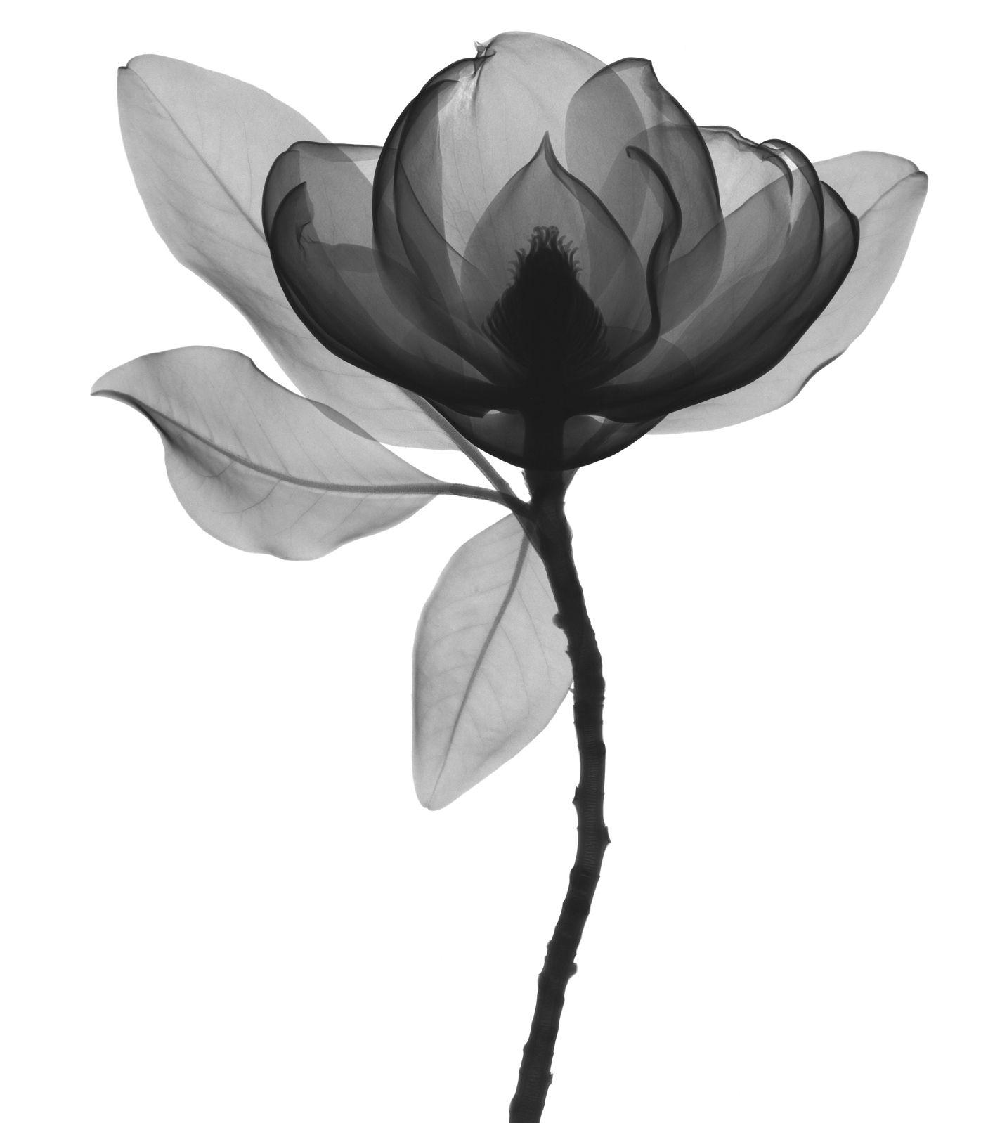 X Ray Flower Tattoo On The Left Inner Arm Tattoo Artist: Flores Preto E Branco