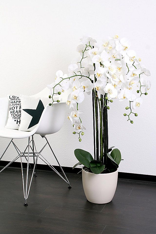 Wunderbar Home Affaire Orchidee XXL