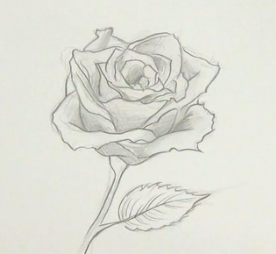 Cómo dibujar una rosa. Las rosas, son unas flores muy bonitas y que ...