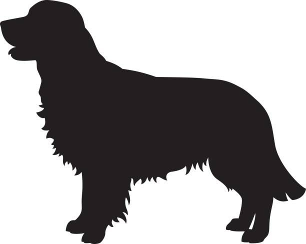 Golden Retriever Dog Vector Silhouette Vector Art Illustration In