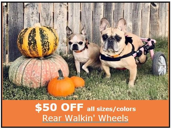 Wheelchairs, Splints And Braces Canine Arthritis And