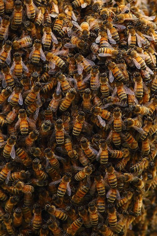 Eeeek i dreamed bee's flew at me last night.... and they were all in my hair and i was madly trying to shake em out!!!!  random.