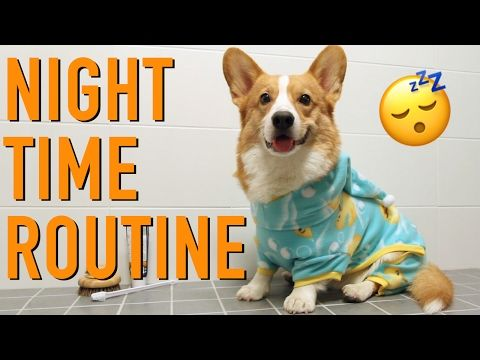 Beauty Sleep Topi The Corgi Youtube Corgi Your Pet Pets