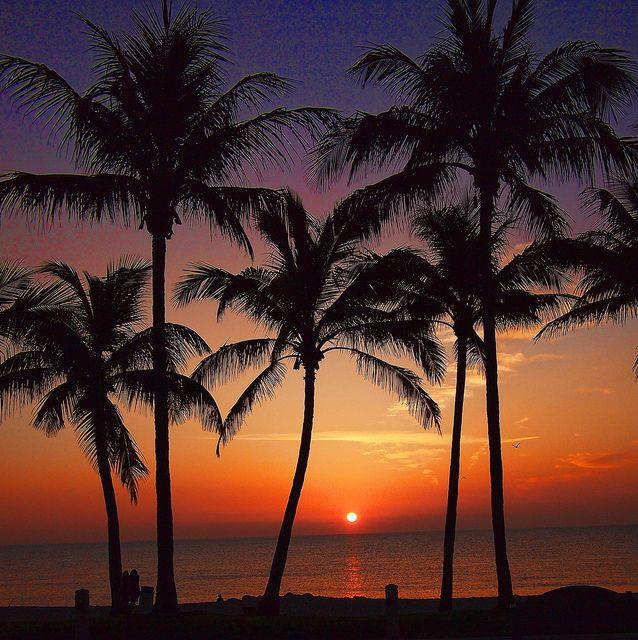 Beach Sunrise Between Palms