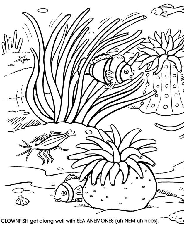 Coral Reef Coloring Page : coral, coloring, Under, Coloring, Pages, Google, Search, Coral, Color,, Page,, Ocean