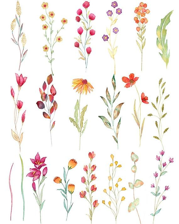 Wild flower watercolor clipart, aquarel wild flowers, floral elements, autumn floral clipart, wedding invitation, boho floral clipart, green #watercolorart