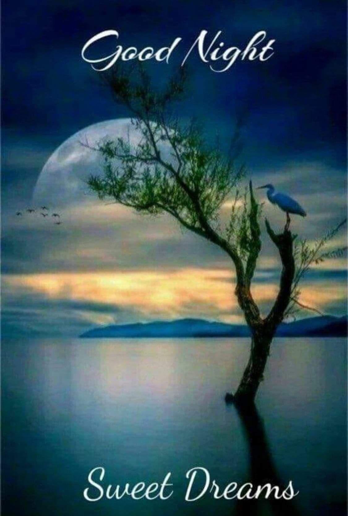 Good Night  Good night sweet dreams, Good night blessings, Good
