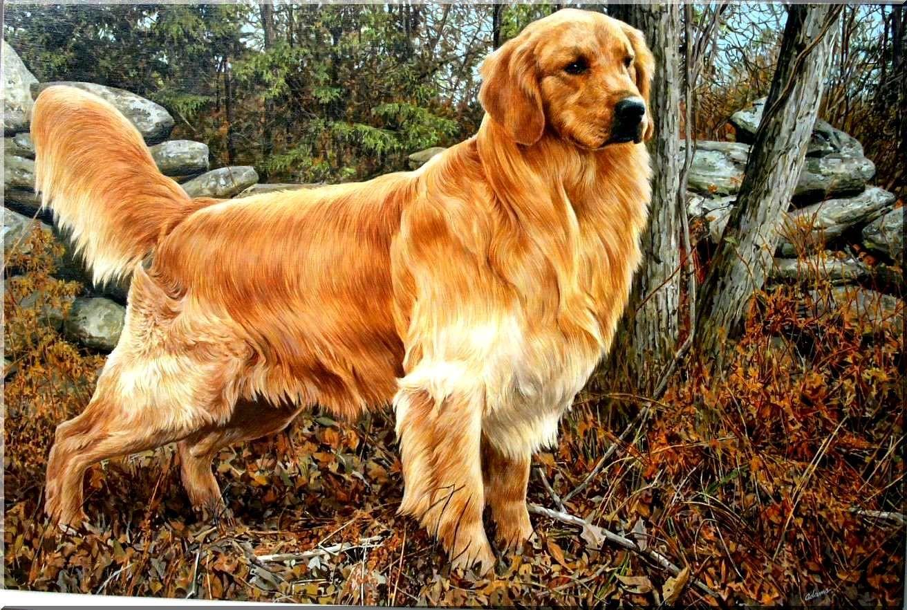 ما تفسير الكلب في الحلم لابن سيرين والإمام الصادق موقع مصري In 2021 Golden Retriever Painting Golden Retriever Golden Retriever Wallpaper