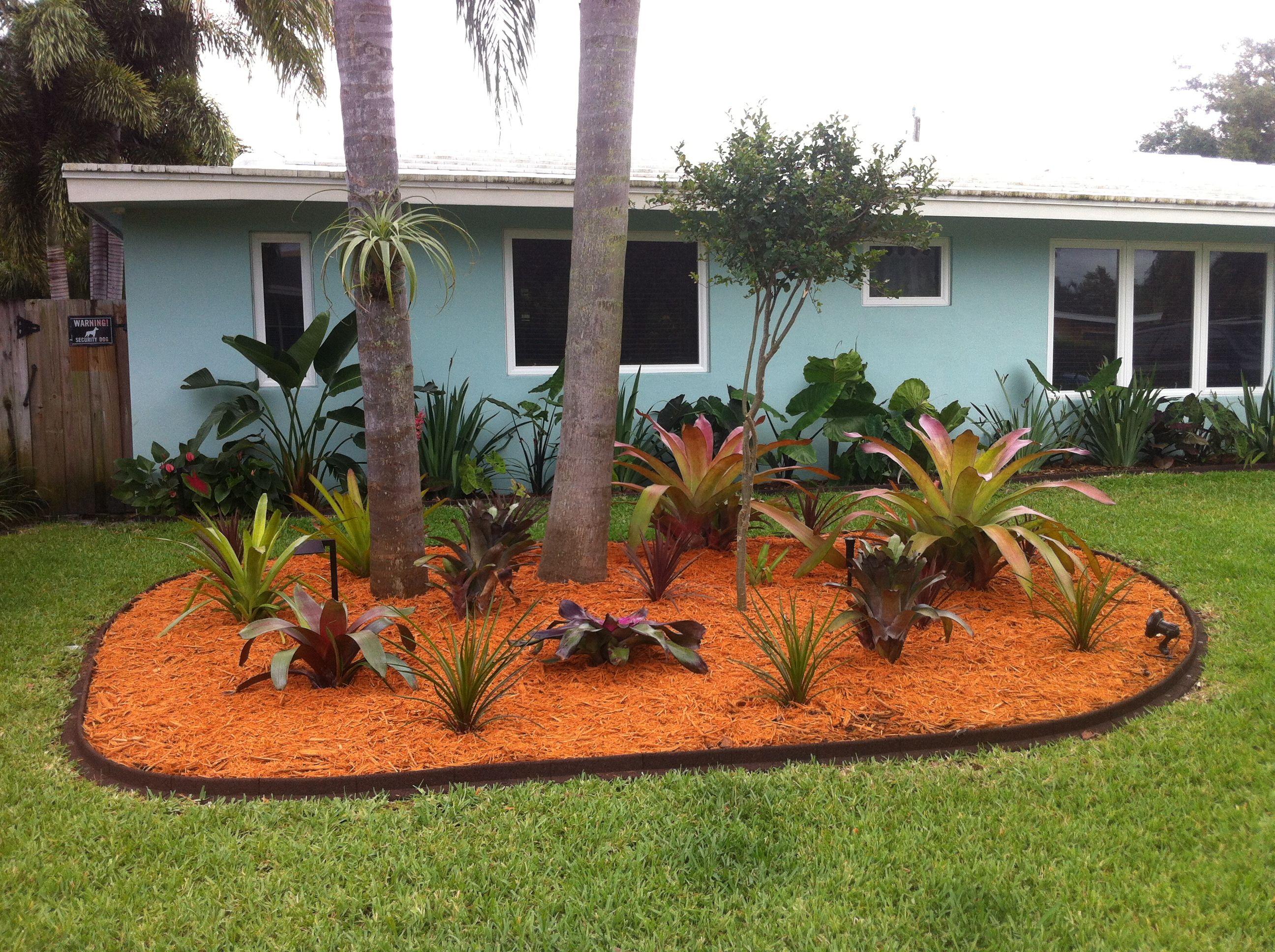 My Front Yard Bromeliad Landscape Around The Queen Palms.