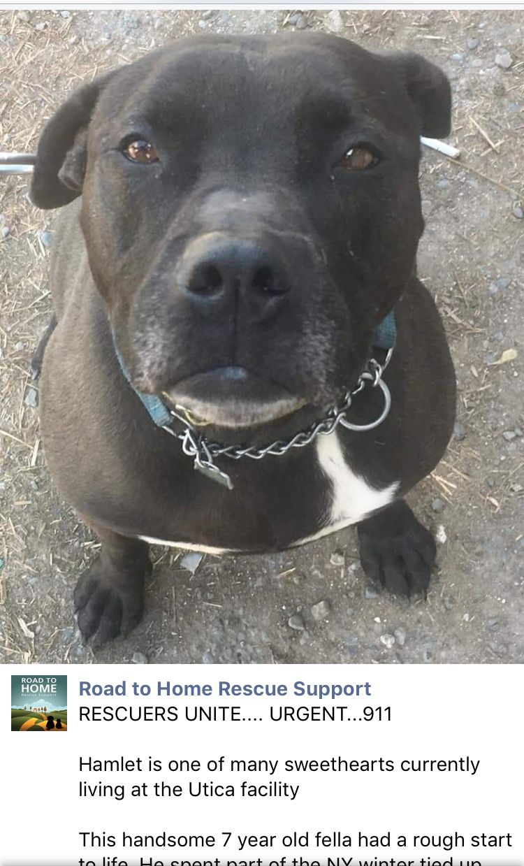 5/29/19 PLEASE READ! HAMLET NEEDS URGENT HELP OUT OF THE