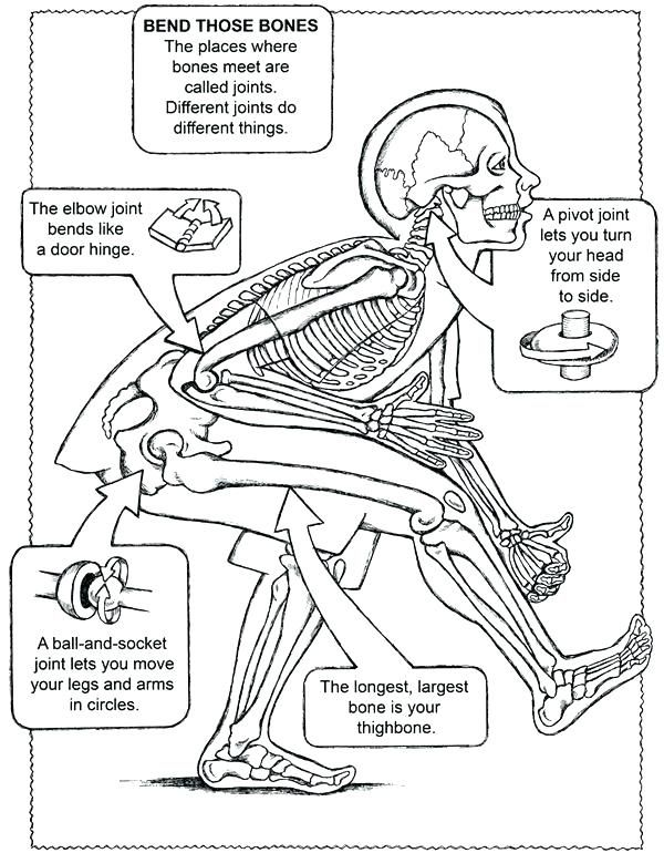 Anatomy And Physiology Coloring Pages Free Download - Anatomy And Physiology  Coloring Book Plus Anatomy Coloring B… Science Education, Human Body  Systems, Anatomy