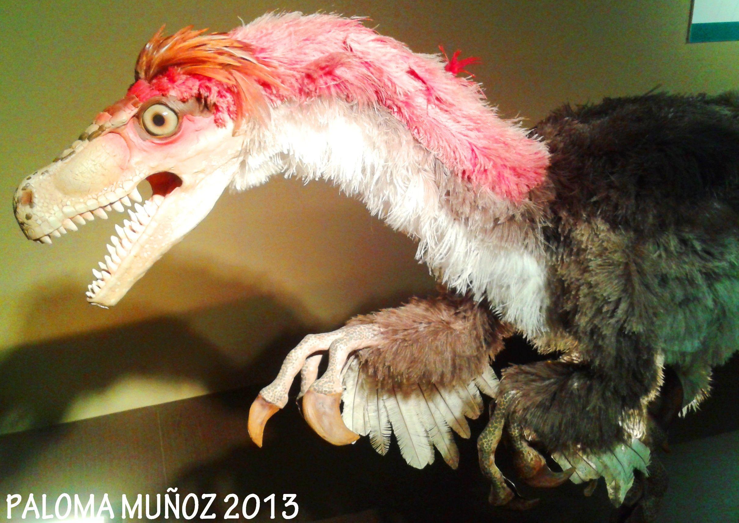 Velociraptor con plumas.  Descubierto en 1924 organizado sistema de manada Velociraptor with feathers.   Discovered in 1924 Organized herd system