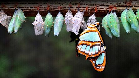 Their metamorphosis has inspired spiritual metaphors and biological debate for centuries.