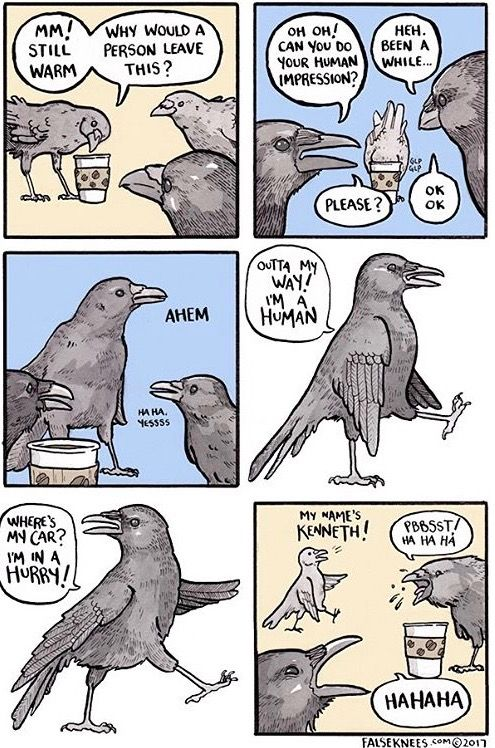Crows Imitating Humans My Name S Kenneth Funny Animal Comics Funny Pictures Funny