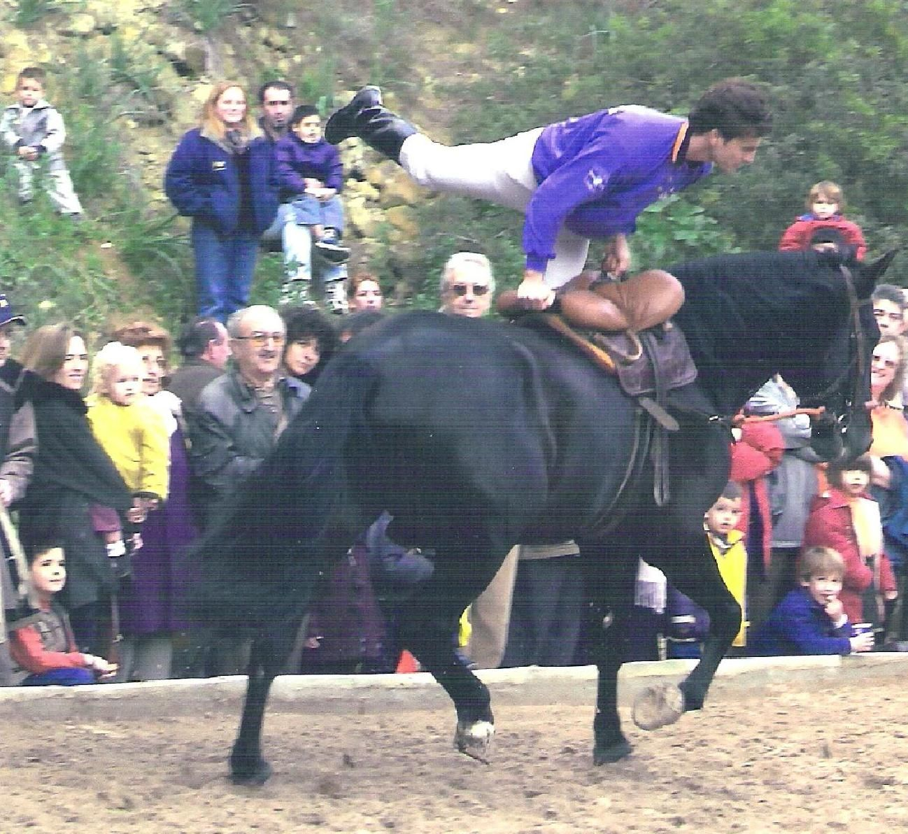 Volteo con caballo mallorquin  Palma Mallorca Spain