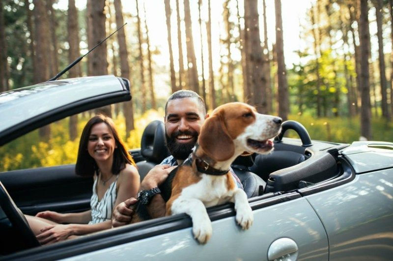 7 reasons why you need pet insurance car insurance this