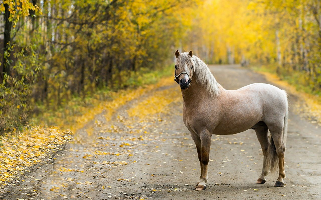 Cheval Routes Automne Animaux Animaux Beaux Chevaux Animales