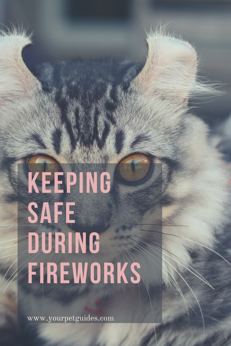 Preparing Your Cat For Fireworks In 2020 American Animals Cats Animal Shelter