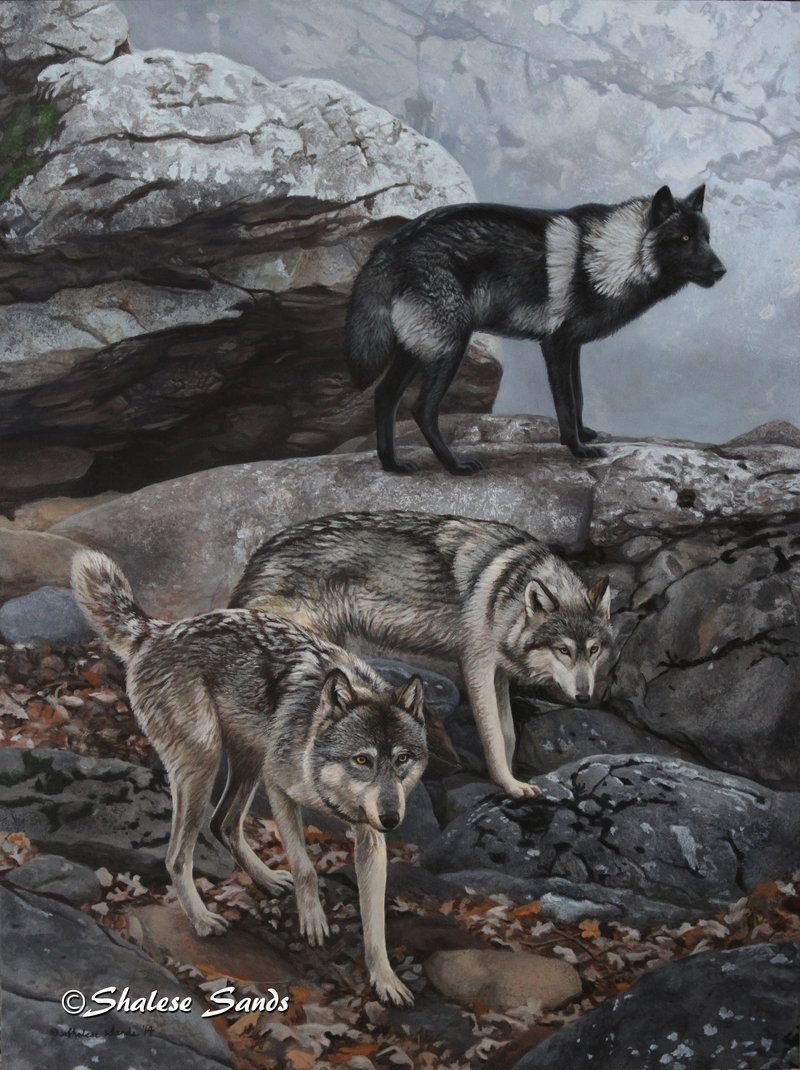Communication on this topic: How to Create a Wolf Pack on , how-to-create-a-wolf-pack-on/