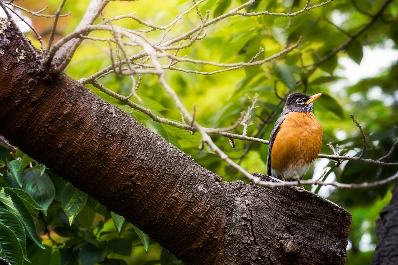 ..bit tricky light conditions, but such a beautiful little bird:D Animal Themes Animal Wildlife Animals In The Wild Beauty In Nature Bird Branch Close-up Day Nature No People One Animal Outdoors Perching Tree