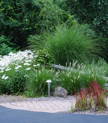 Buy Maiden Grass Plants Online | Free Shipping Over $99#buy #free #grass #maiden #online #plants #shipping
