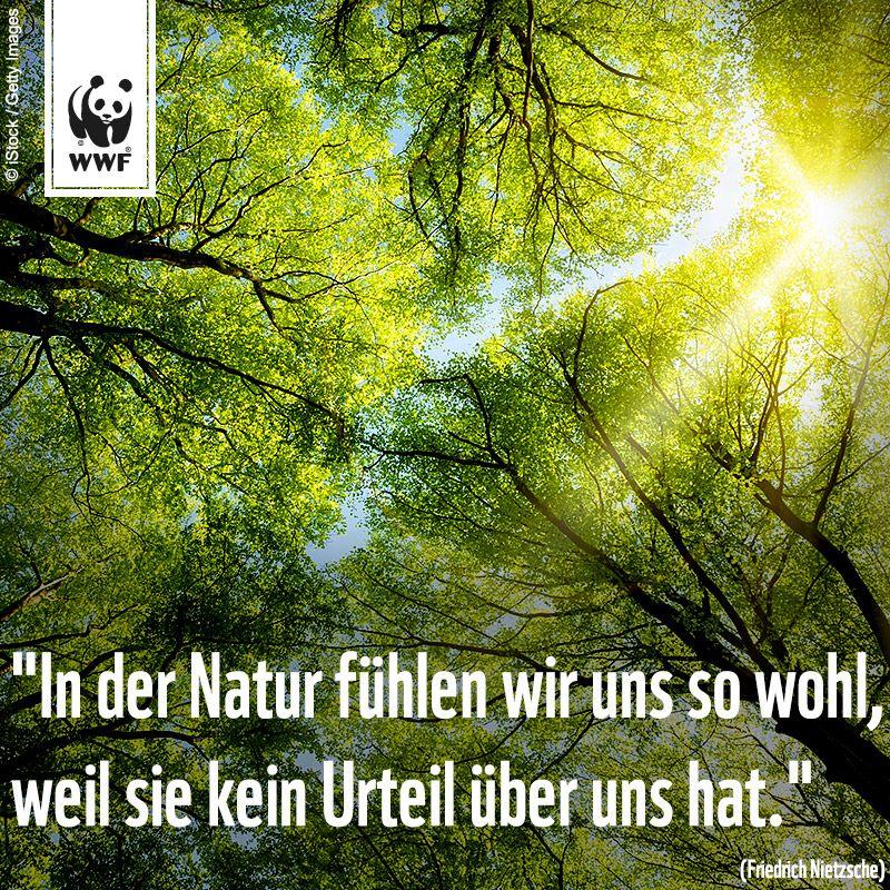 Zitat Zum Sonntag In Der Natur Fuhlen Wir Uns So Wohl Weil Sie Kein Urteil Uber Uns Hat Friedrich Nietzsche Spruche Zitate Spruche Zitate