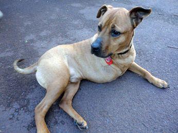 Festus The Three Legged Therapy Dog Dogs Dog Life