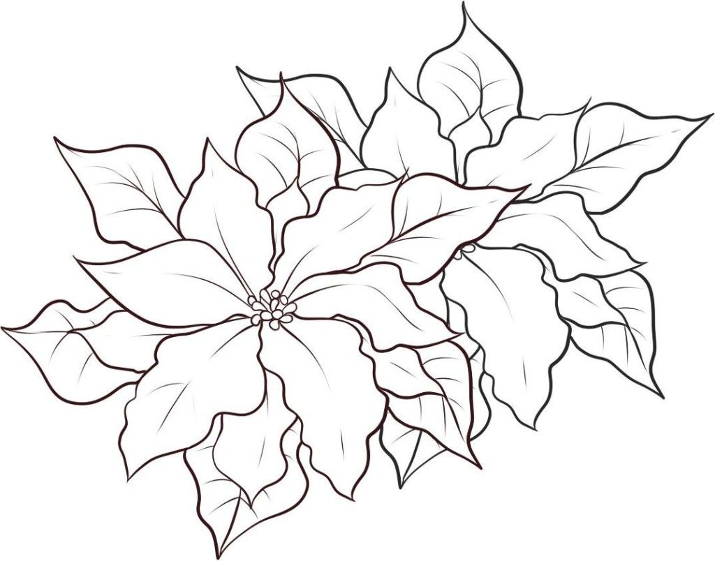 free printable poinsettia coloring pages - Google Search | Downloads ...