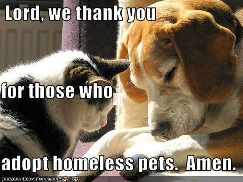 When you adopt a shelter pet you are saving TWO lives; one you will be bringing home and one whose life will be spared due to an available cage.
