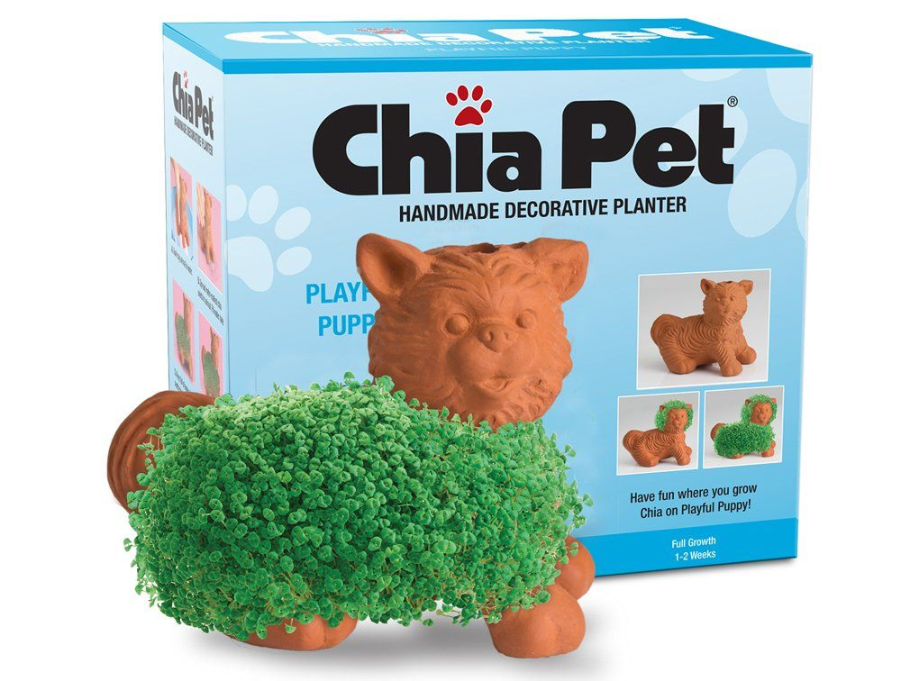 Chia Pet Playful Puppy Decorative Pottery Planter Easy To Do And