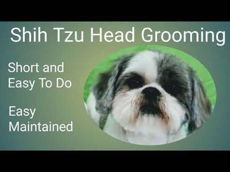 Sue Wright Dog Grooming Maltese Cross Shihtzu Face Youtube