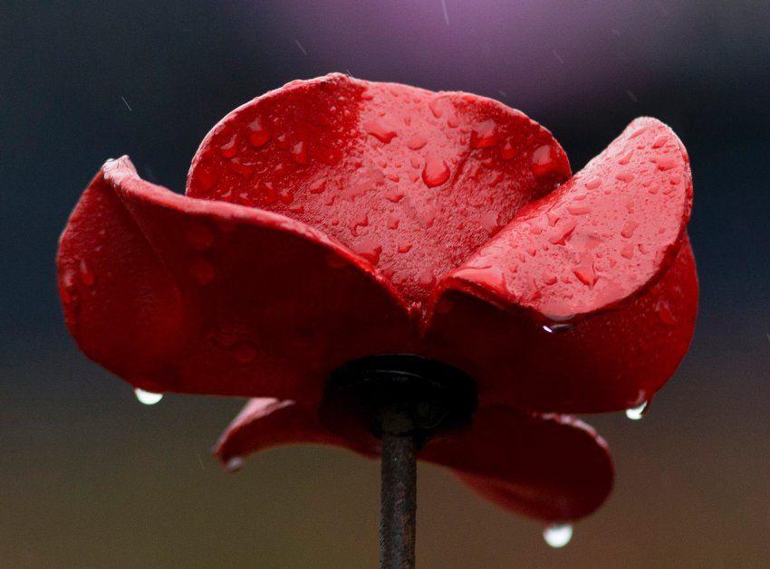 Tower Of London Keramik Mohnblumen Erinnern An Weltkriegsende Der Spiegel Panorama Mohnblume Keramik Blumen