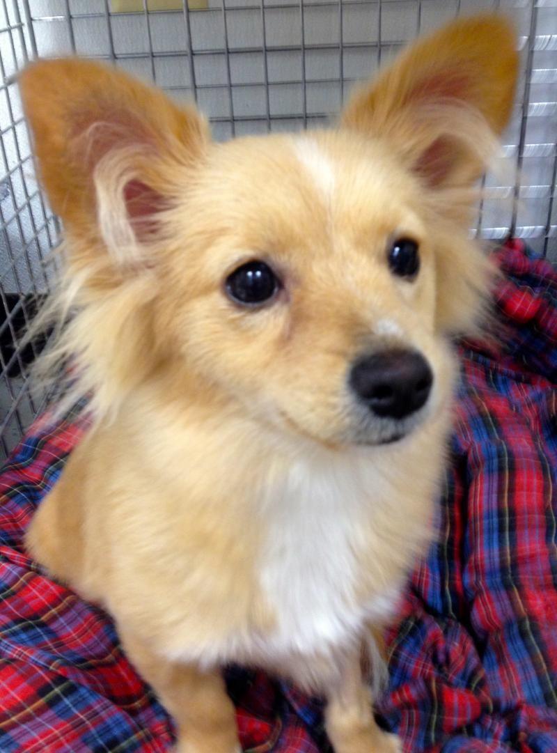 Adopt Autumn2/4/16 on Adoption, Puppies, Pup