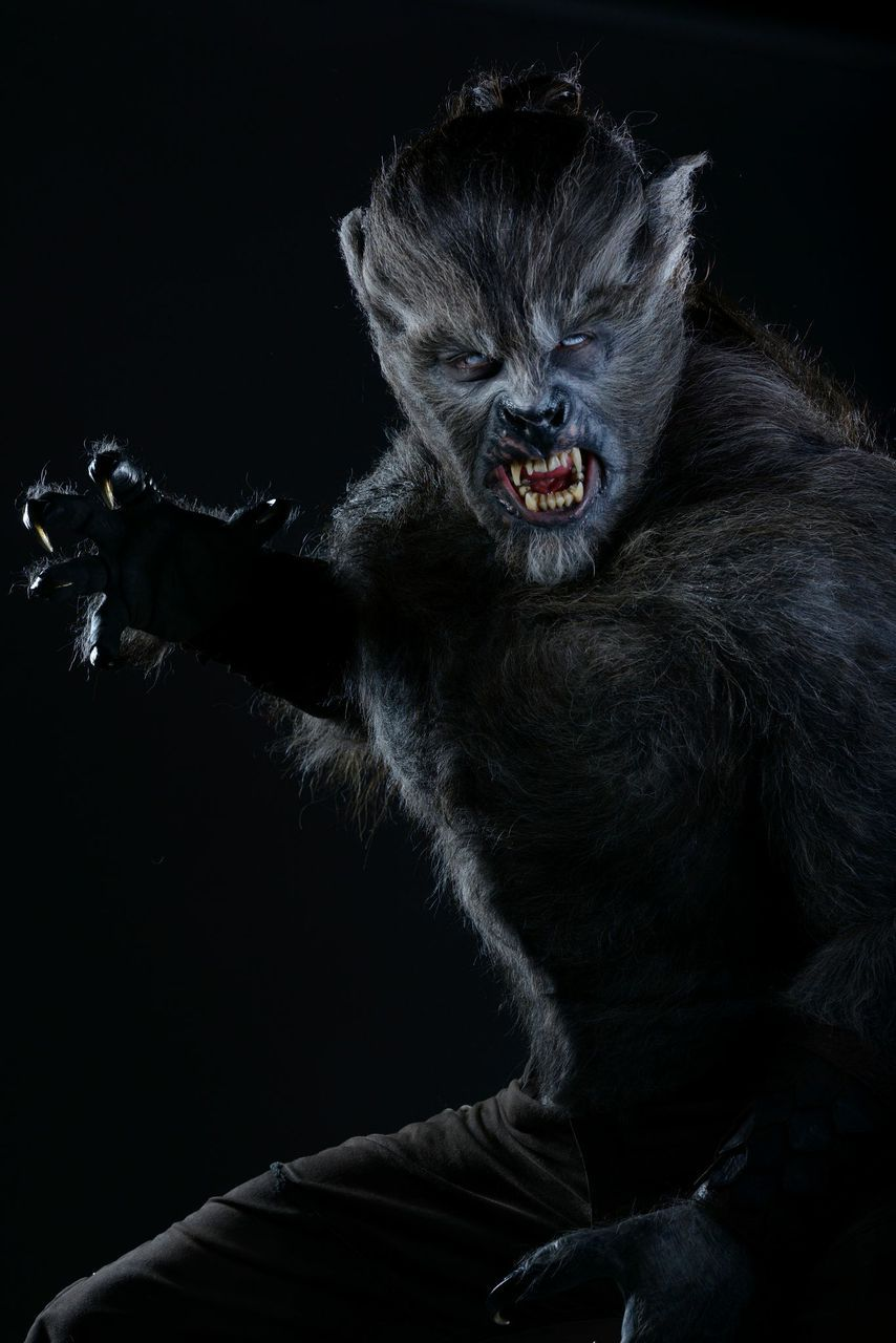 male wolf from wolves  u2026