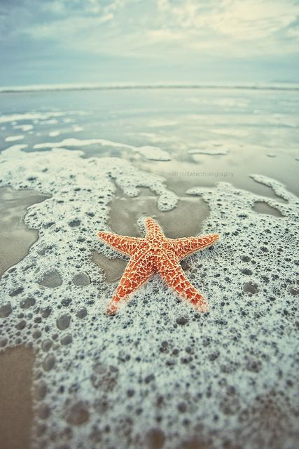 Photo Starfish Wallpaper