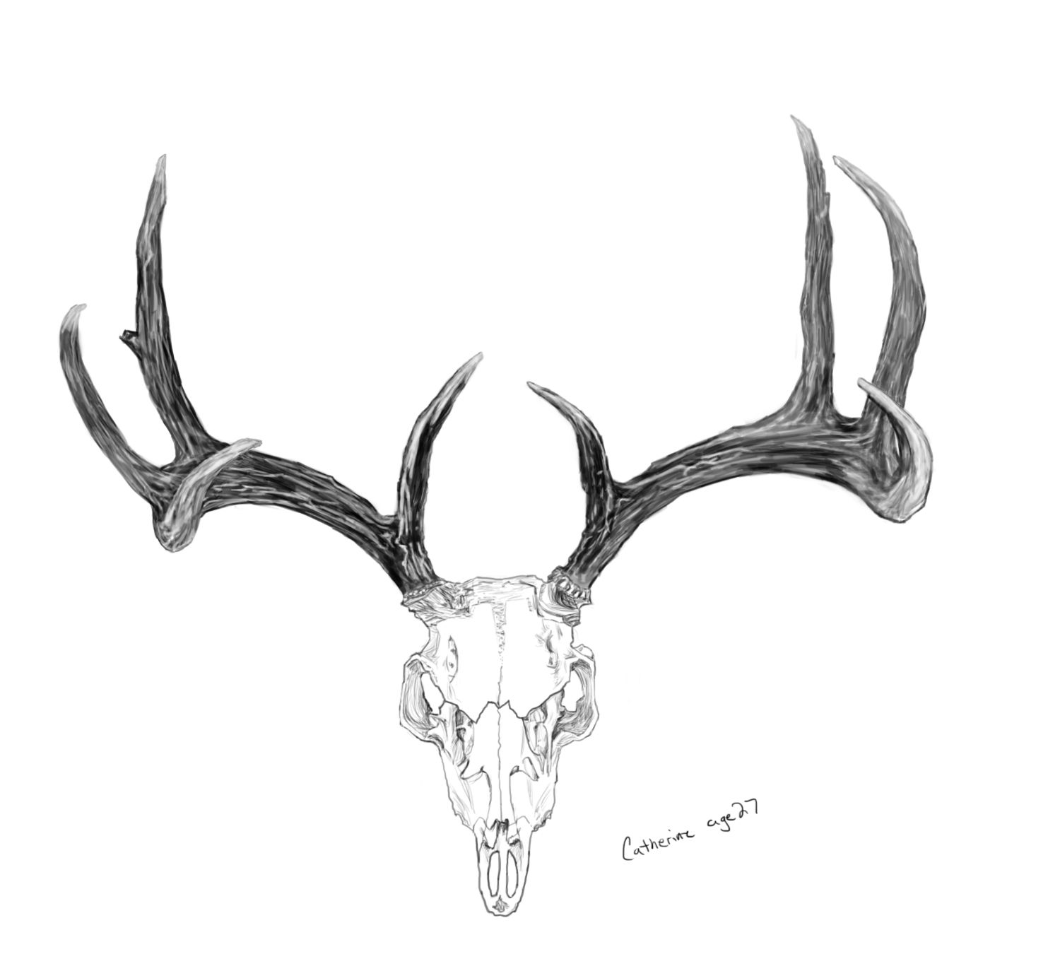 Deer Antler Coloring Pages Meaning Designs Trend