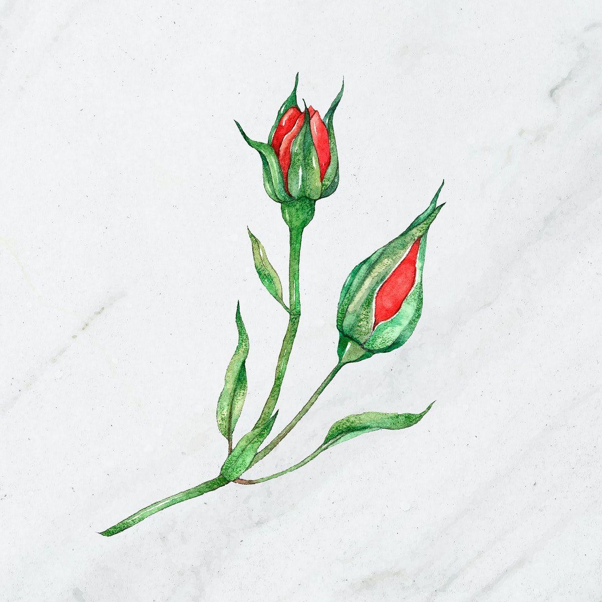 Rose outline free download clip art on clipart jpg - Clipartix