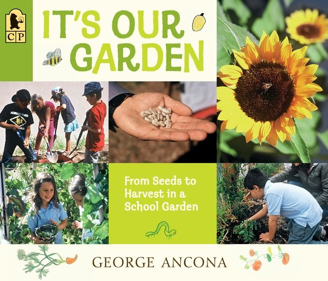 It's Our Garden: From Seeds to Harvest in a School Garden by George Ancona #school #garden #nonfiction #kidlit #picturebooks