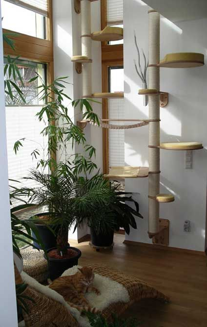 Pin von daniela ma auf f r die katz katzen katzen wohnungen und kratzbaum - Katzen catwalk wand ...